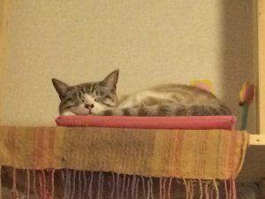 猫タワーで眠るびび