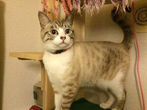 猫タワーで遊ぶびび