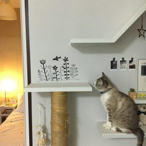 猫タワー びび