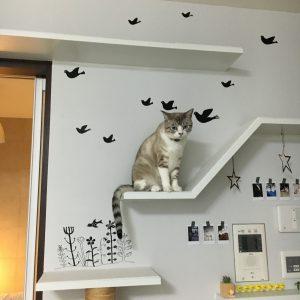 猫タワーとびび