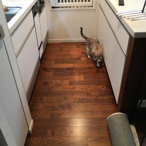 キッチンにいるびび