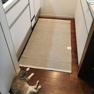 pappelinaと猫