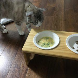 ご飯を待っていたびび