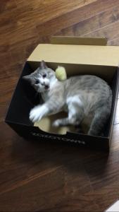 箱の中で遊ぶびび