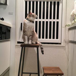 ビビは猫です