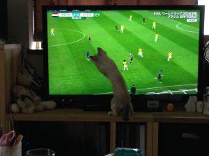 サッカーと猫