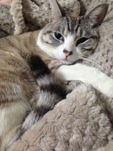 無印良品 毛布